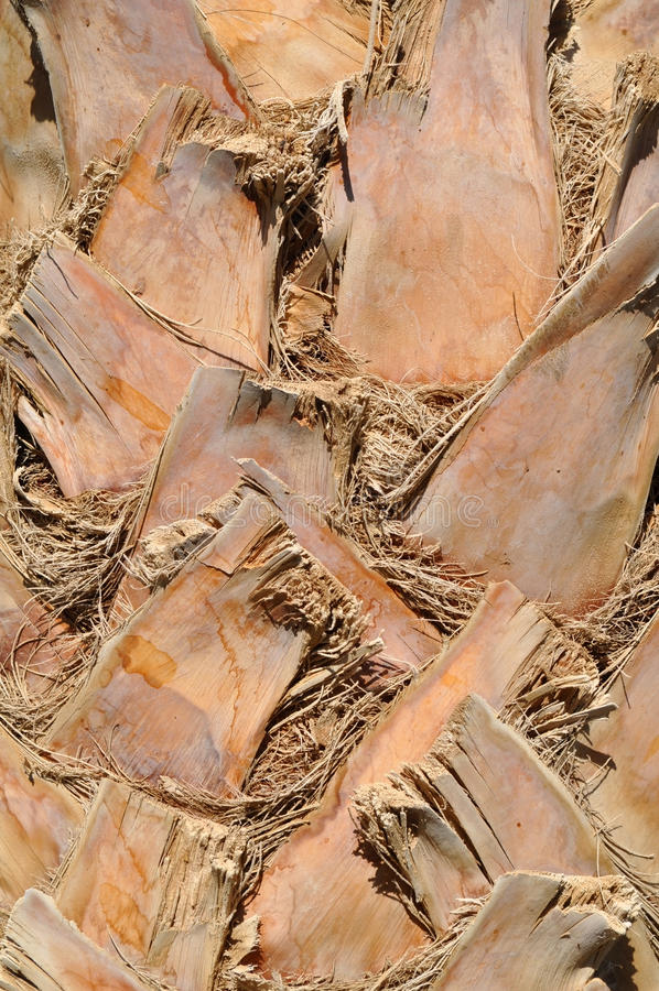 Download Palm Bark, Texture, Background Stock Photo - Image: 22509426