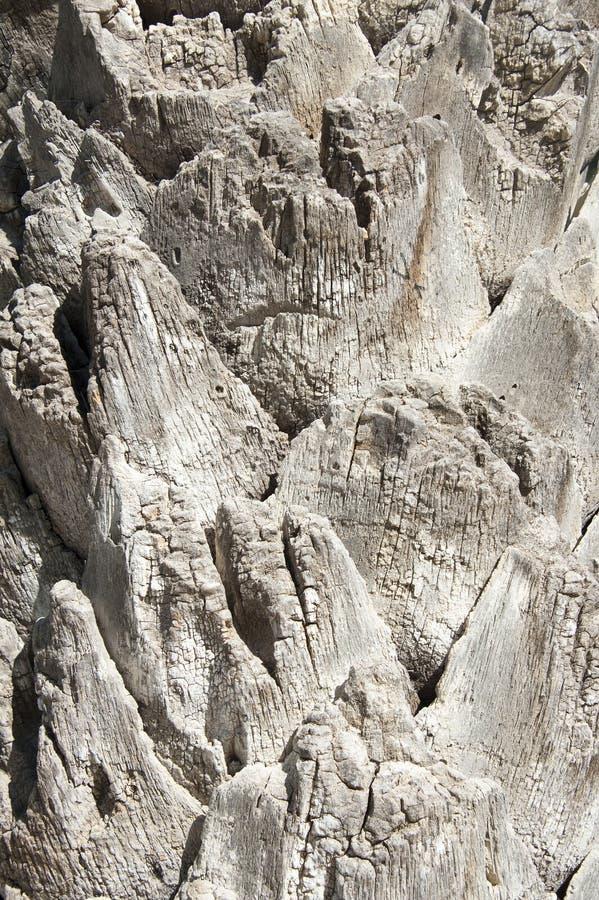 Palm bark texture royalty free stock photos