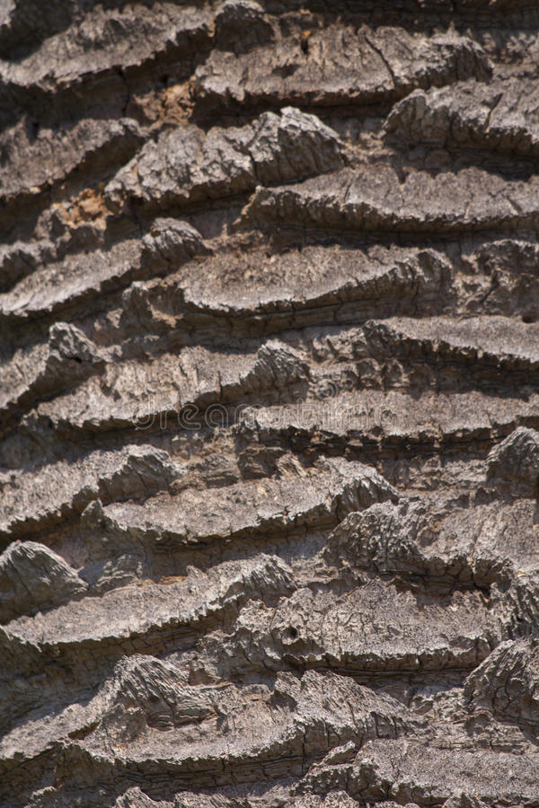 Palm bark stock images