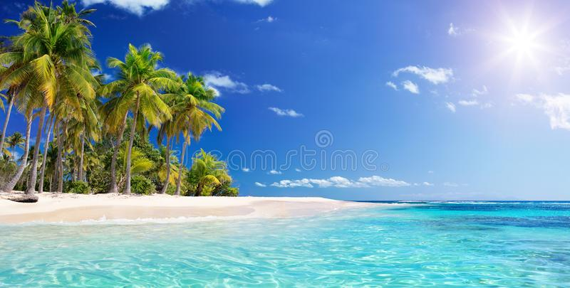 Palm Beach στον τροπικό παράδεισο στοκ εικόνες