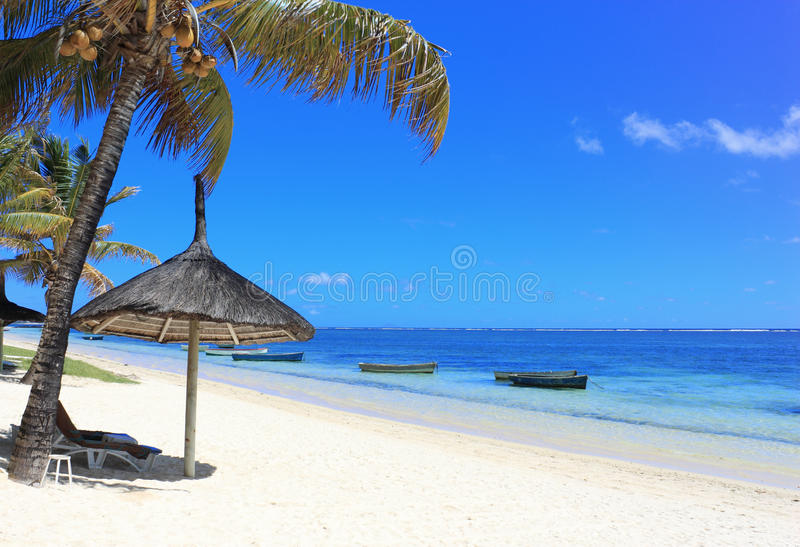 Download Palm beach stock image. Image of blue, relax, vacation - 12311663