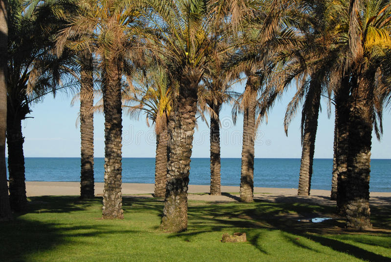 Palm Beach royalty-vrije stock afbeelding