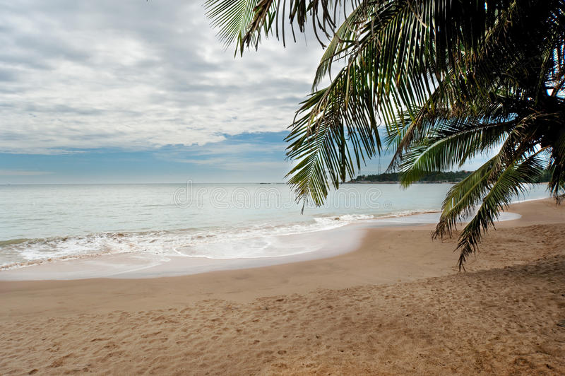Download Palm beach stock photo. Image of beautiful, nobody, caribbean - 19122970