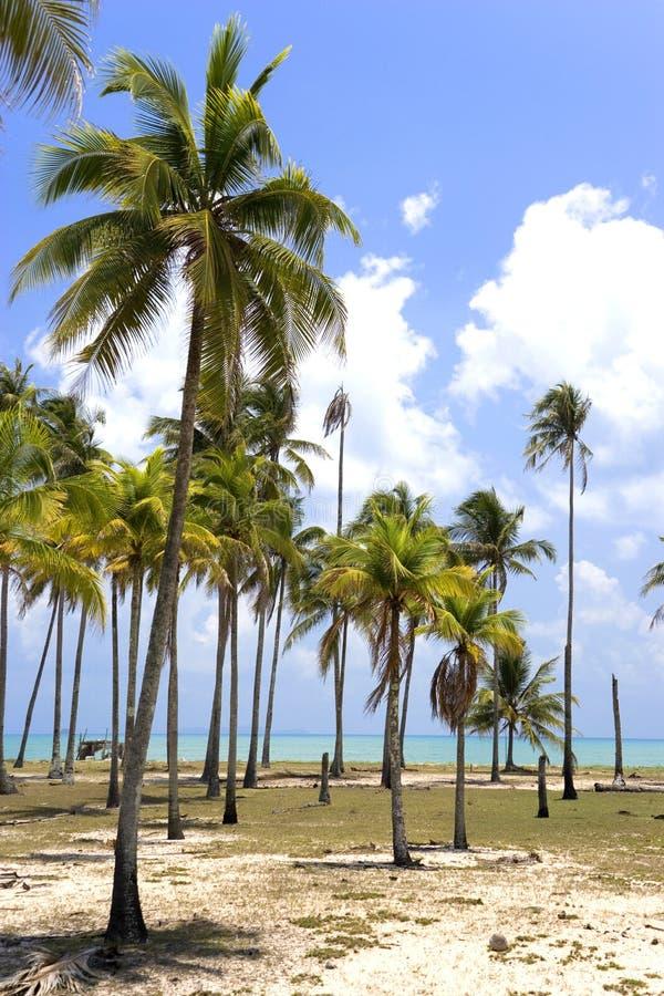 Palm Beach foto de archivo