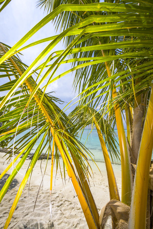 Download Palm at the beach stock photo. Image of ocean, leaf, blue - 24316324