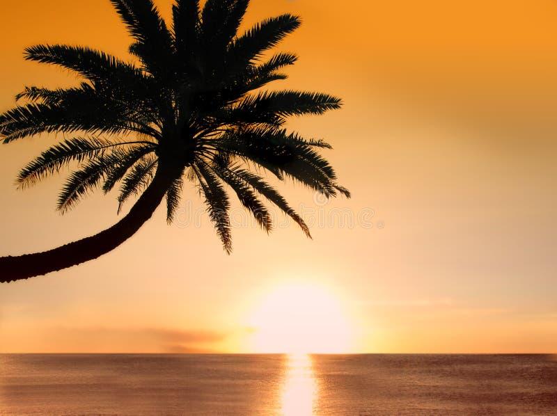 Palm Beach lizenzfreies stockbild