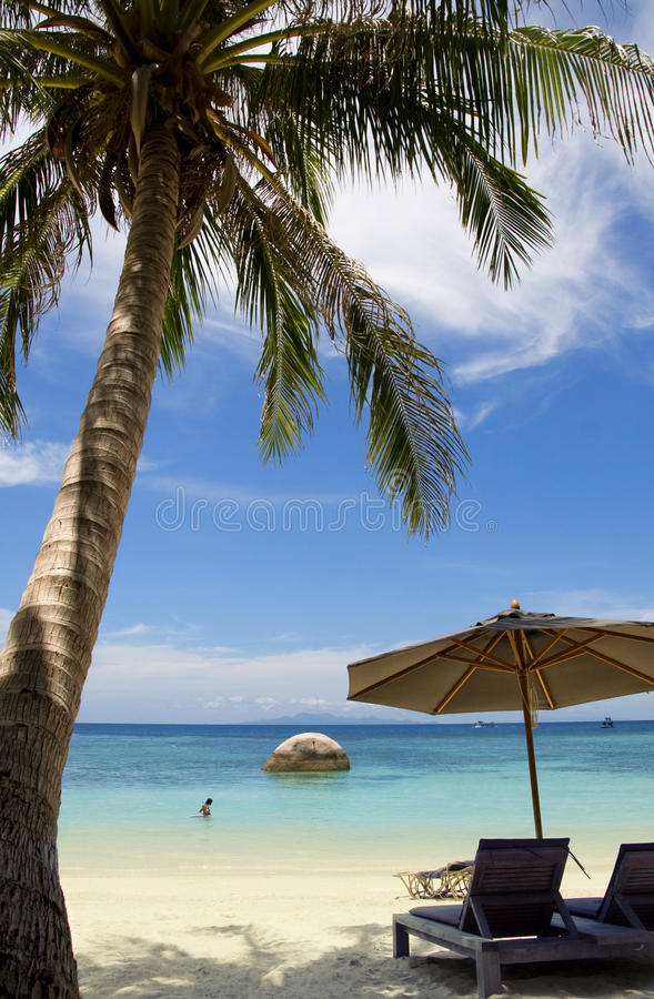 Download Palm on the beach stock photo. Image of clouds, island - 26545106