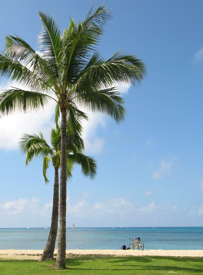 Palm Beach imagens de stock royalty free