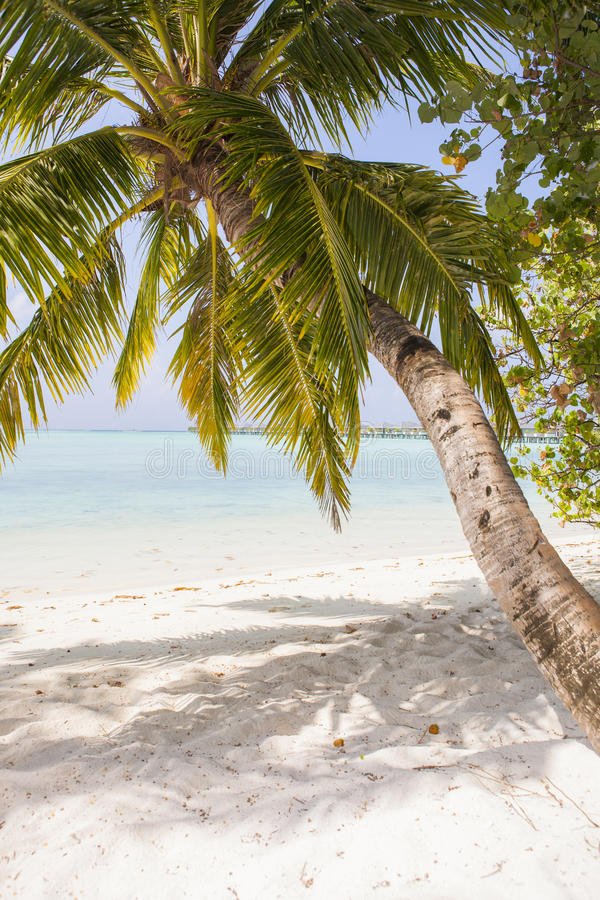 Download Palm Beach Royalty Free Stock Photo - Image: 27338405