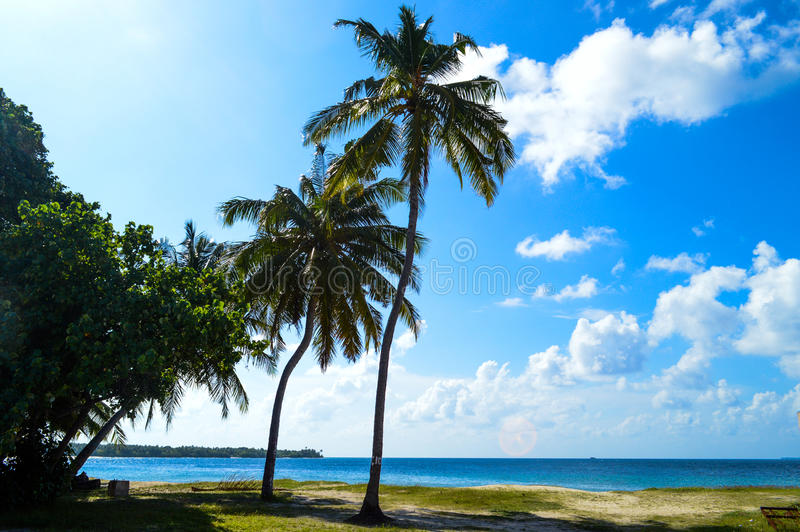 Palm Beach Royalty Free Stock Photo