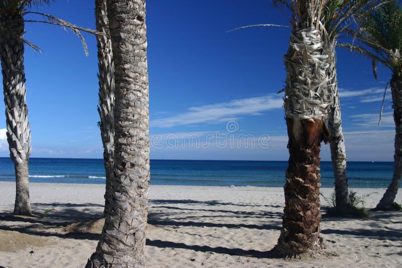 Palm Beach Imagen de archivo