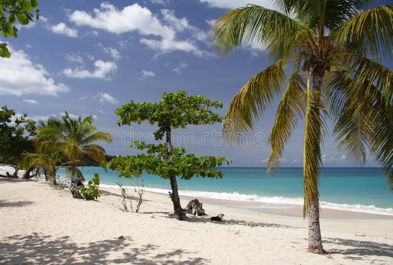 Palm Beach royalty free stock photos