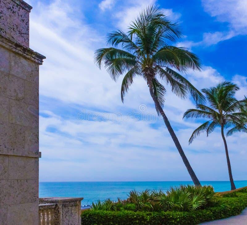 Palm Beach Florida, USA - hav och träd på värd ave royaltyfri foto