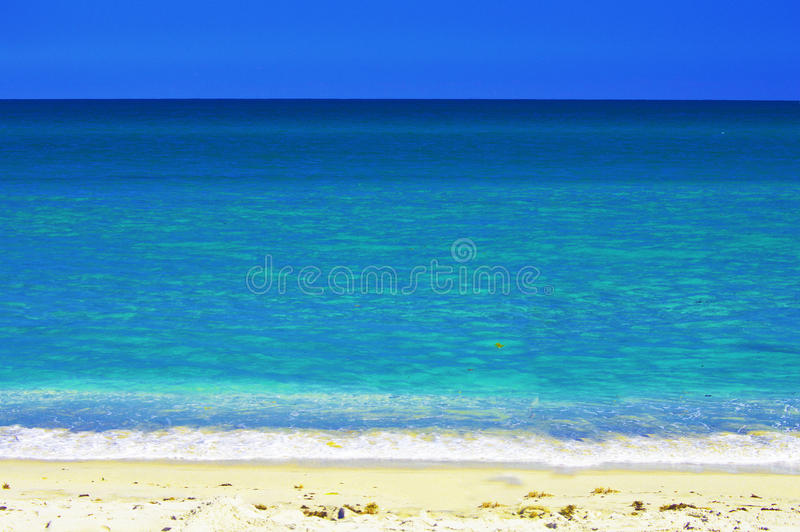 Palm Beach Florida USA. With vivid blue background color royalty free stock photography