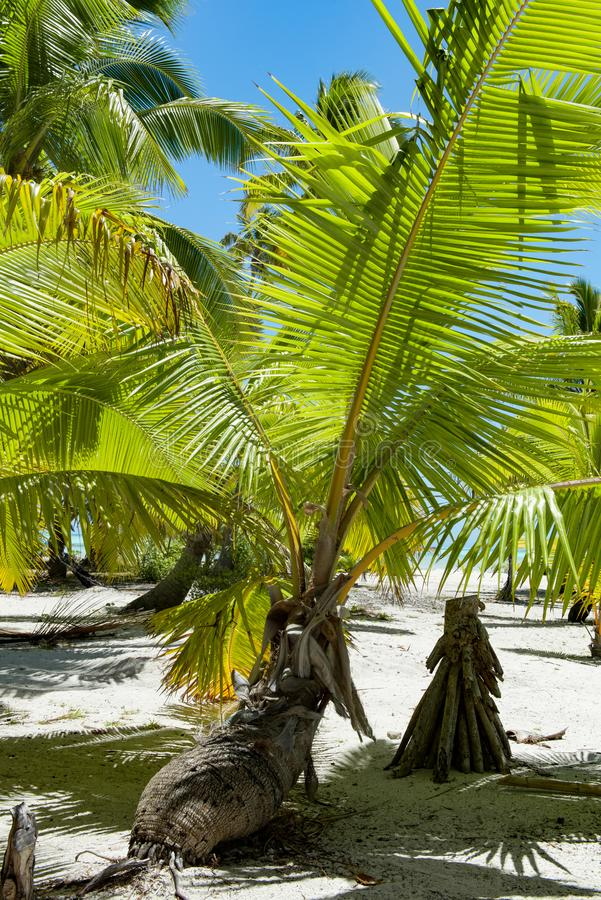 Palm with laying trunk on tropical beach on small island in South Pacific Ocean royalty free stock photography