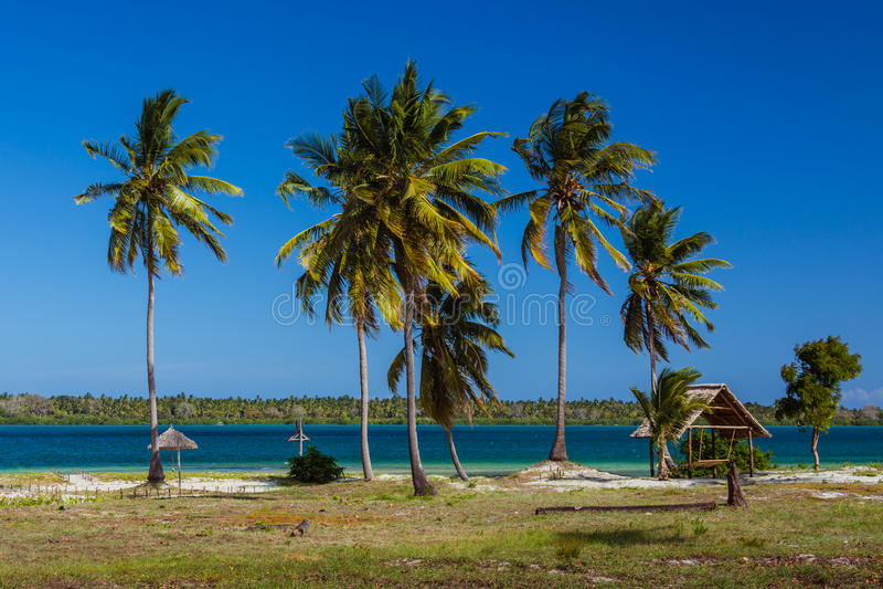 Palm beach of Mafia Island. Tanzania stock images