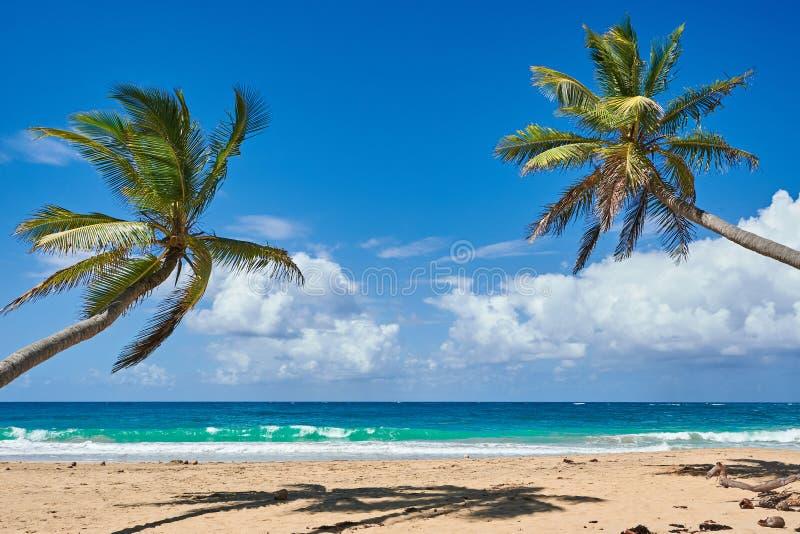 Palm Beach Na Ilha Tropical Idyllic Paradise Island - Caribe - República Dominicana Punta Cana imagem de stock
