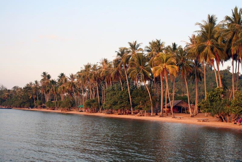 palm beach słońca fotografia royalty free