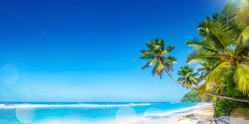 Palm Beach In Tropical Paradise. Summer Travel Seychelles Islands stock photos