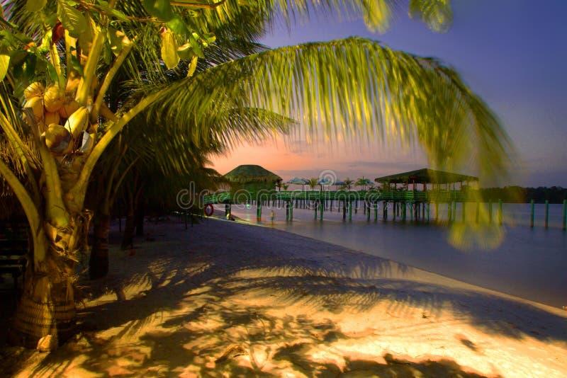 Palm- Beachparadies stockbild