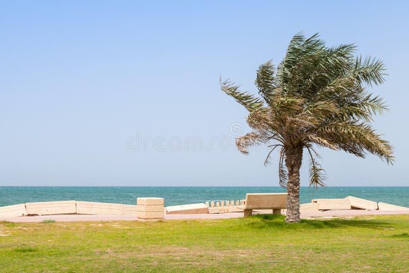 Palm and bench on coast of Persian Gulf, Saudi Arabia royalty free stock image