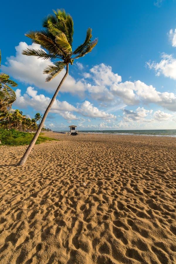Palm bij dageraad op het strand van Miami, Miami, Florida, de Verenigde Staten van Amerika royalty-vrije stock afbeeldingen