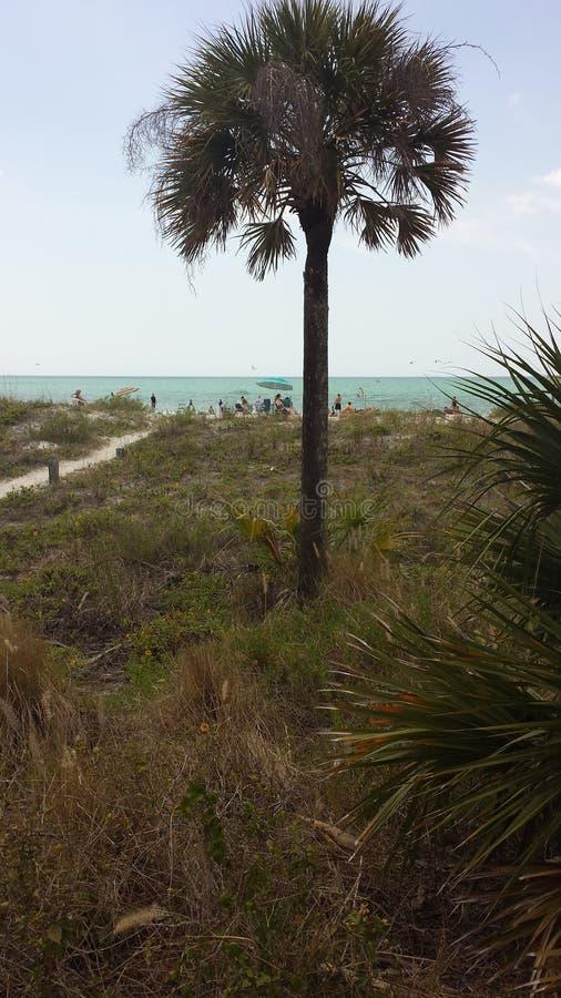Palm bij de oceaan royalty-vrije stock foto's