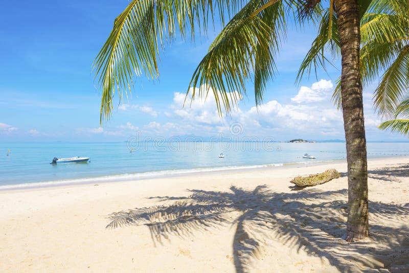 Palm bij strand in Penang, Maleisië stock foto