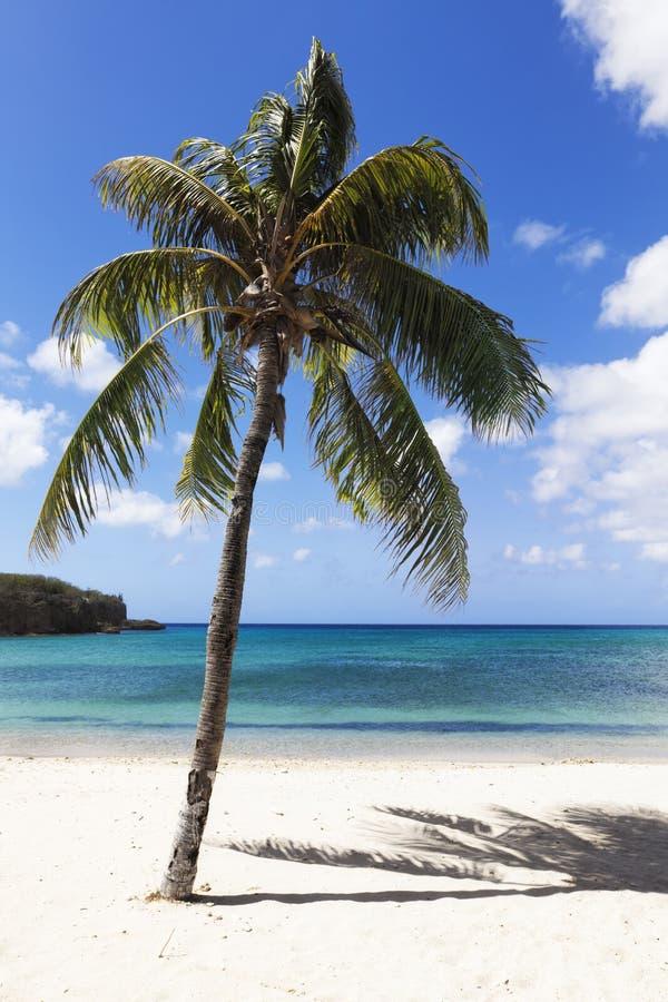 Palm bij tropisch strand royalty-vrije stock foto's