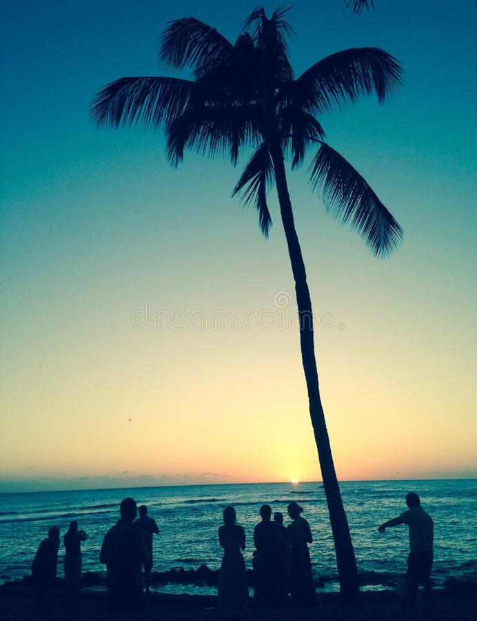 Palm bij zonsondergang stock afbeeldingen