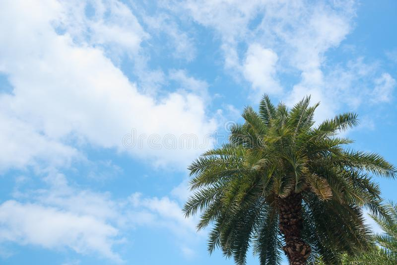Palm on blue sky background. Vacation, travel and tropical theme royalty free stock images