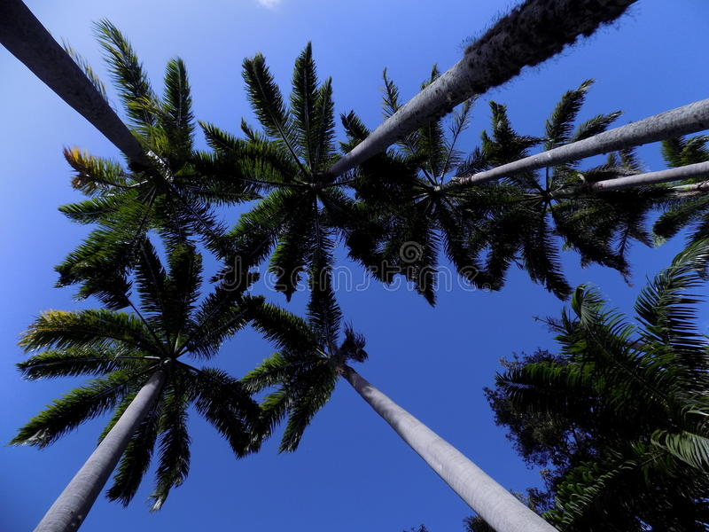 Palm in the blue sky stock images