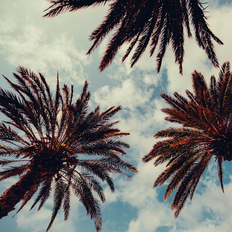 Palm and blue sky.Palm Beach fashion background stock photos