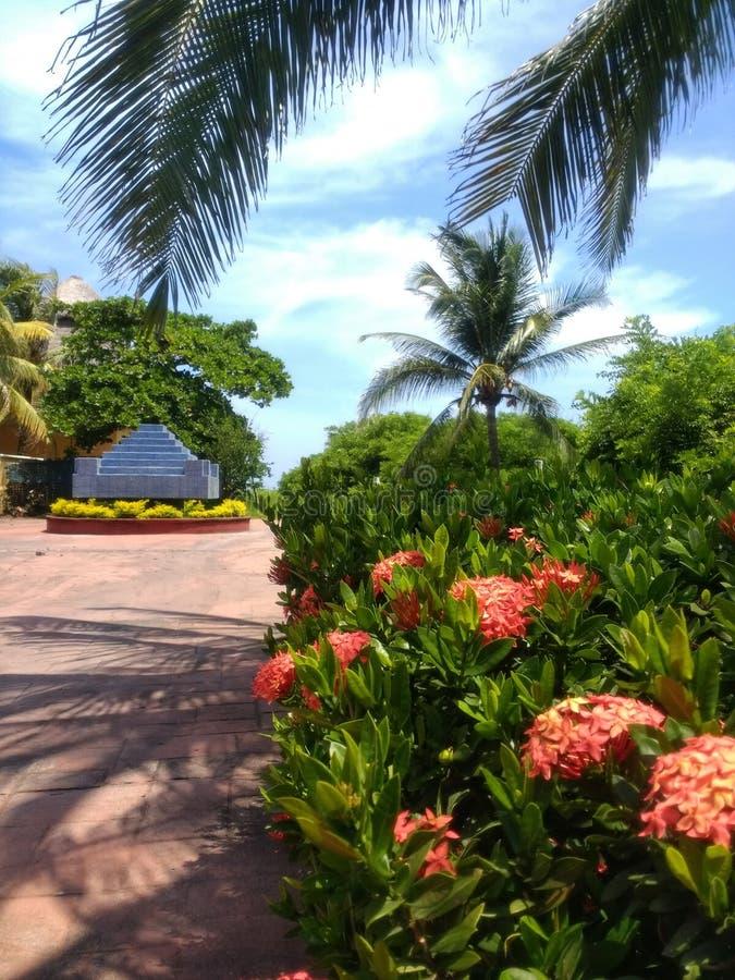 Palm, bomen, struiken, en roze bloemen stock afbeelding