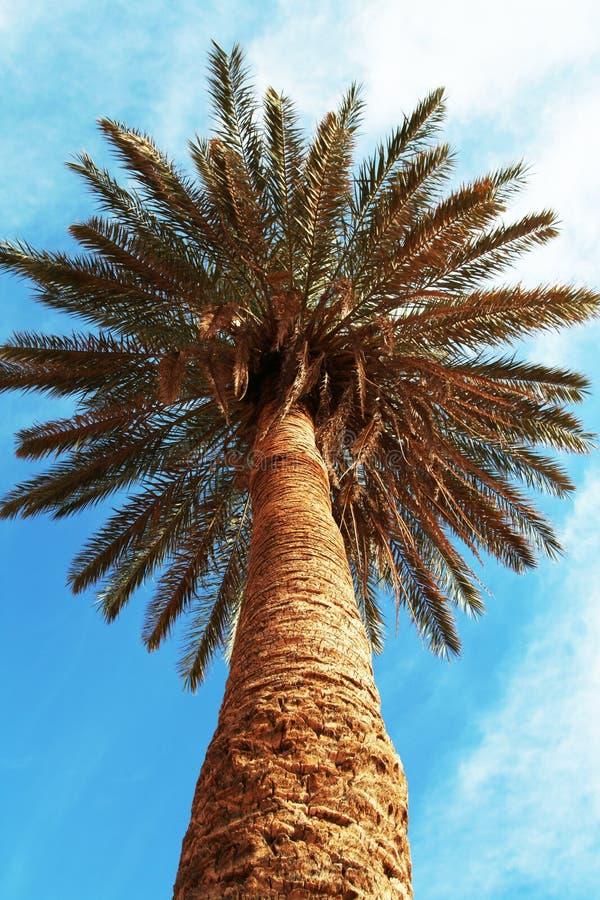 Palm-boom stock foto's