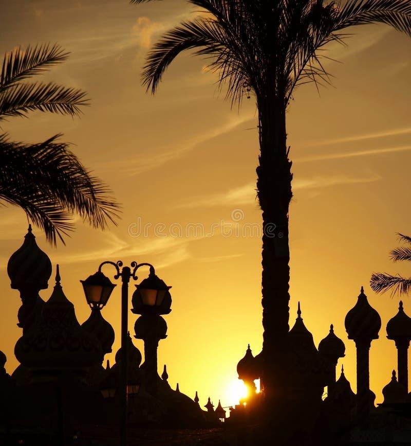 Palm-boom en koepelsilhouet stock foto's