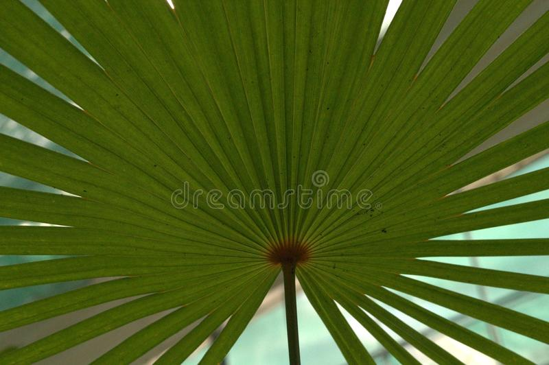 Palm branch in Budapest bothanic garden stock photography