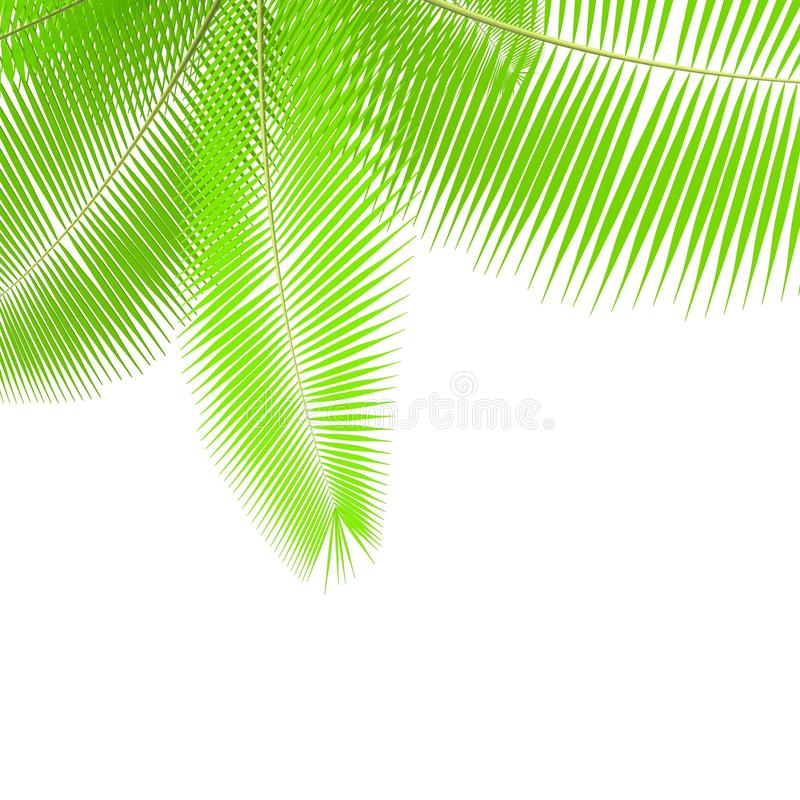 Free Palm Branches Stock Images - 18041224