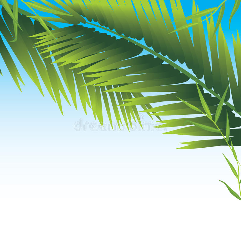 Download Palm branches stock vector. Image of plant, exotic, palm - 25927221