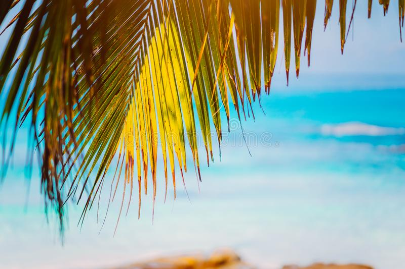Palm branches on blue ocean, blurred background, summer abstract backdrop design, beach vacation travel exotic tropical stock photos