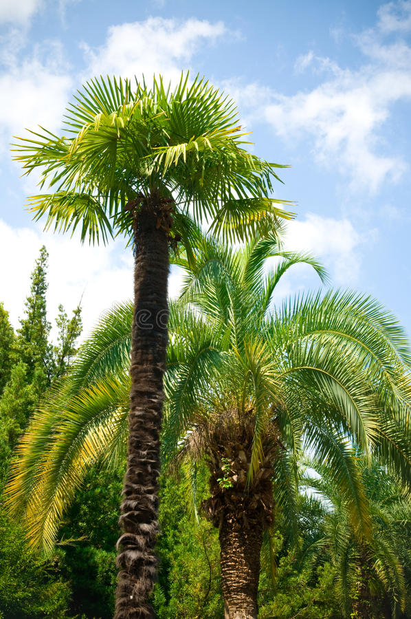 Download Palm Brunch Royalty Free Stock Photo - Image: 10748325
