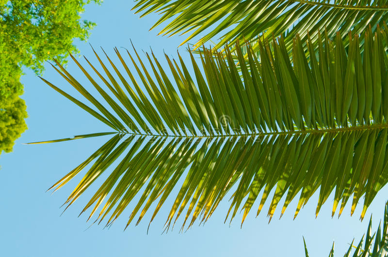 Palm Brunch With Sky Royalty Free Stock Photo