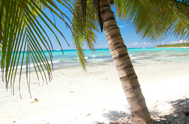 Download Palm on calm caribbean sea stock photo. Image of tropic - 16651486