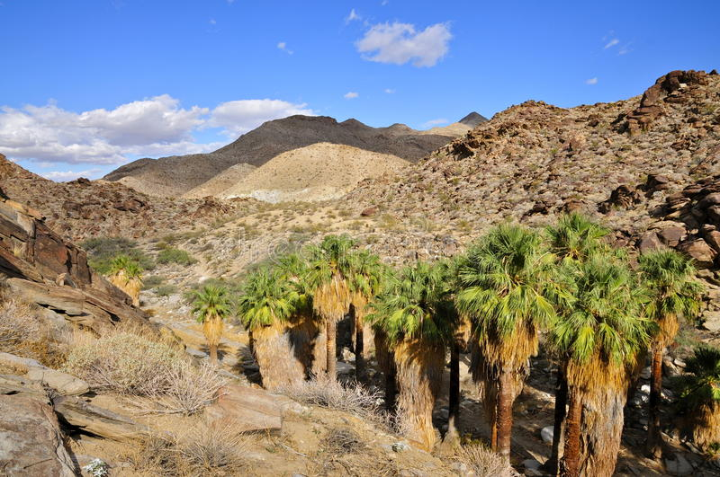 Palm Canyon, Palm Springs. Gorges and groves of California Fan Palms between the arid North slopes of the Santa Rosa Mountains. Palm Canyon, Palm Springs, CA royalty free stock photos