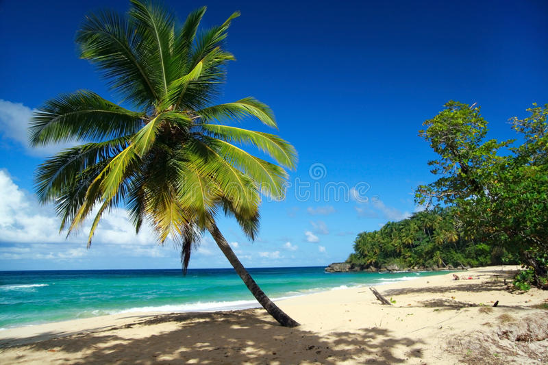 Palm on caribbean beach with white sand royalty free stock photo