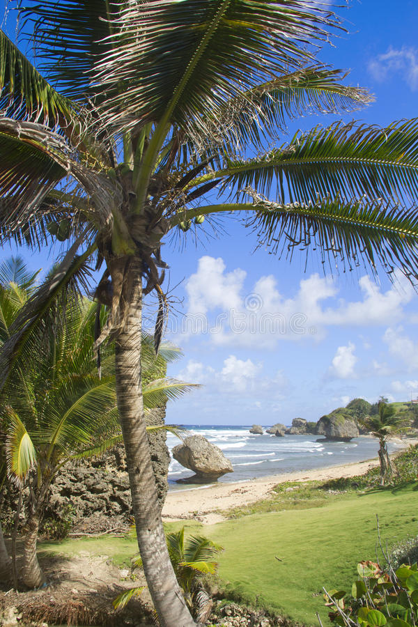 Palm in Cattlewash royalty-vrije stock foto
