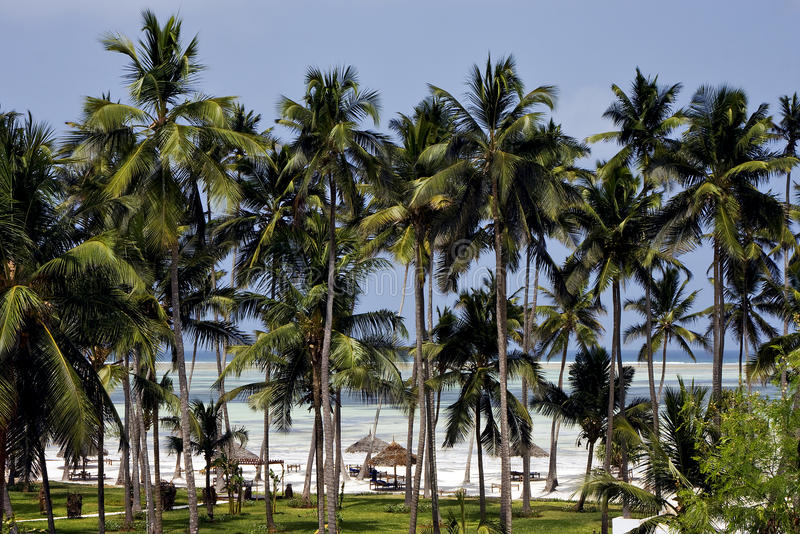 Download Palm And Coastline In  Zanzibar Stock Photo - Image: 28227276