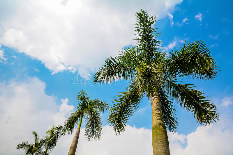 Download Palm Royalty Free Stock Images - Image: 33187179