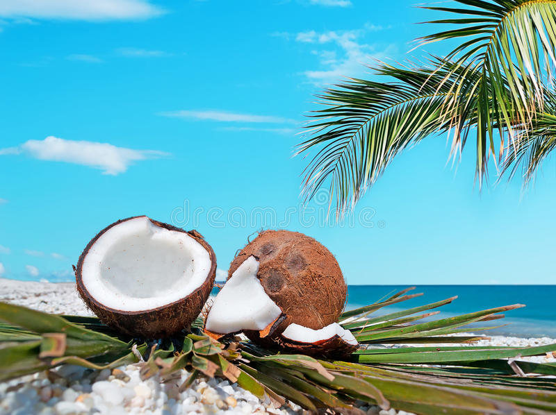 Download Palm and coconuts stock image. Image of summer, scenic - 32308025