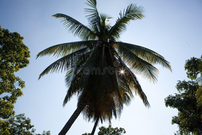 Palm in Cuba royalty-vrije stock fotografie